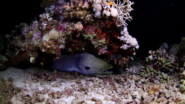 moray eel eat fish - moray eel stock videos and b-roll footage