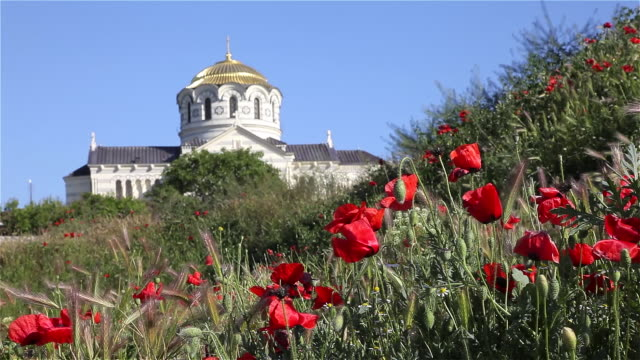 red poppies and saint vladimir cathedral - sevastopol crimea stock videos and b-roll footage