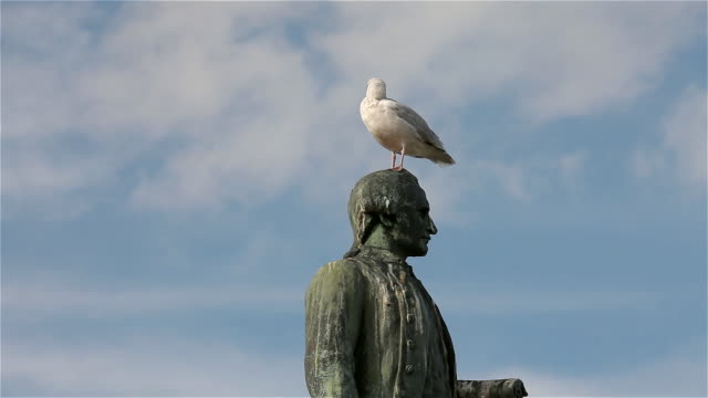 vídeos y material grabado en eventos de stock de herring gull and captain cook statue - yorkshire