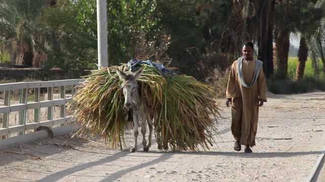 stockvideo's en b-roll-footage met man with donkey carrying sugar cane - alleen één mid volwassen man