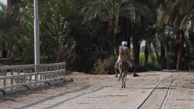 back view of old man on donkey - ワーキングシニア点の映像素材/bロール