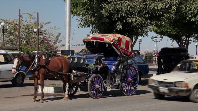 horse and carriages - horse cart stock videos and b-roll footage