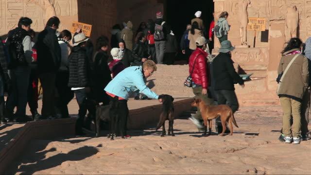 stockvideo's en b-roll-footage met woman feeds dogs - vier dieren