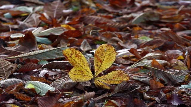 vídeos de stock e filmes b-roll de autumn leaves on ground in woodland - scarborough reino unido