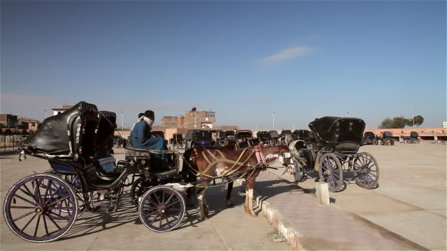 horses and carriage - horse cart stock videos and b-roll footage