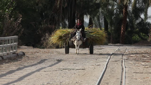 BOY WITH DONKEY AND CART CARRYING SUGAR CANE