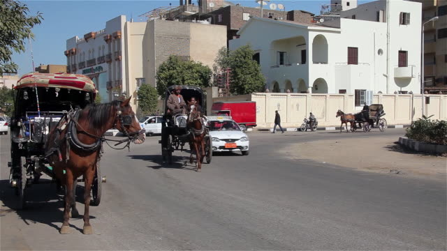 stockvideo's en b-roll-footage met horse and carriages - paard en wagen