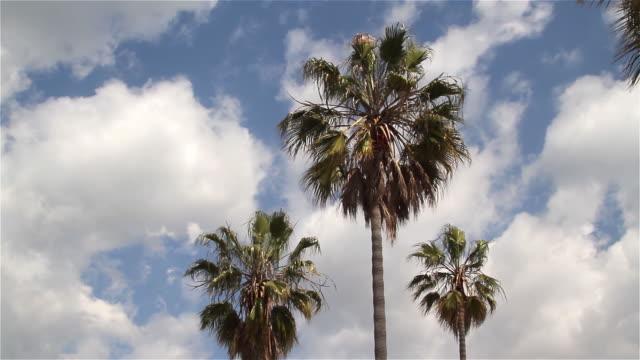 palm trees - venice beach stock videos & royalty-free footage