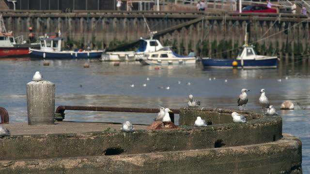 seagulls and fishing boats - bridlington stock-videos und b-roll-filmmaterial