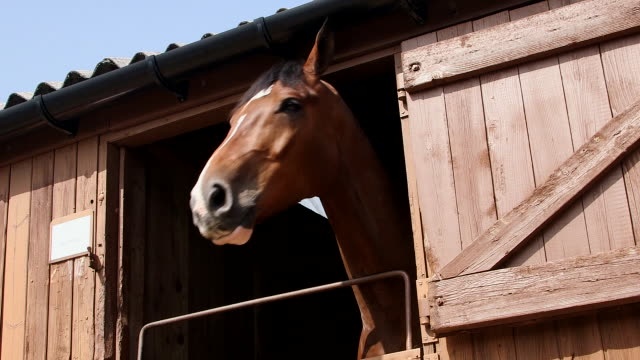 vídeos y material grabado en eventos de stock de horses looking out of stable doors - establo