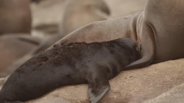 seals - 数匹の動物点の映像素材/bロール