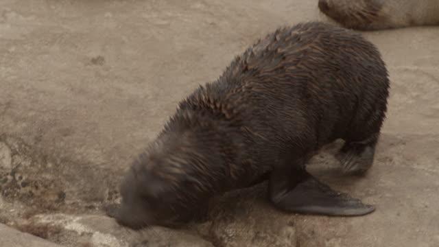 seals - kleine gruppe von tieren stock-videos und b-roll-filmmaterial