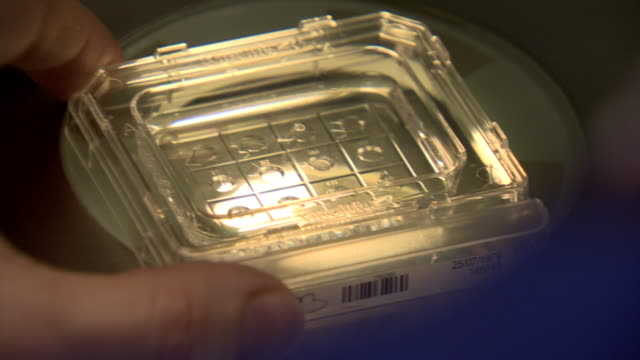 nnps343x - microbiology stock videos and b-roll footage