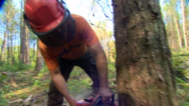 vidéos et rushes de nnps355b - tronc d'arbre
