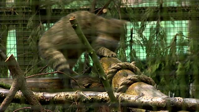 nnps361r - 捕らえられた動物点の映像素材/bロール