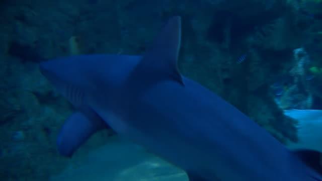 vídeos y material grabado en eventos de stock de nnps367f - aleta parte del cuerpo animal