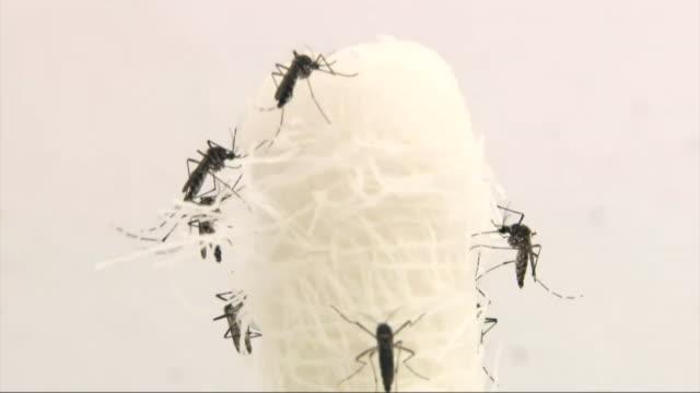 vidéos et rushes de nnbg979y) - virus zika