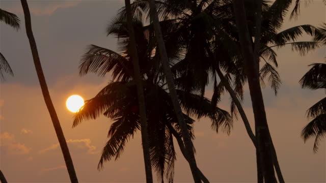 vídeos de stock e filmes b-roll de king coconut palm trees at sunset - grupo médio de animais