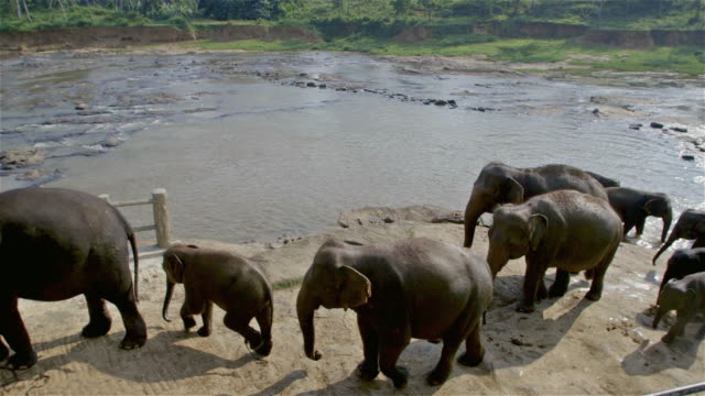 ASIAN ELEPHANT LEAVE MAHA OYA RIVER
