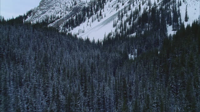 aerials snow-covered mountains/forests, kananaskis county, alberta, canada - alberta stock videos & royalty-free footage