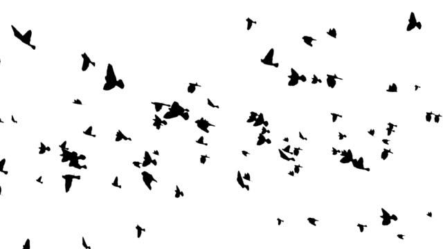 vídeos de stock e filmes b-roll de muitos pássaros de cruzamento - bando de pássaros