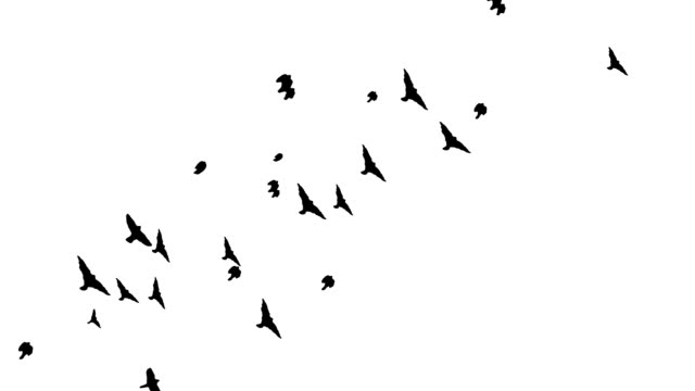 A LOT OF BIRDS PASSING