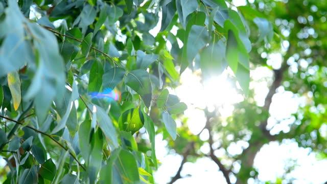 日光の木の風 - 木漏れ日点の映像素材/bロール