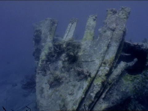 stockvideo's en b-roll-footage met colorful fish swim around a shipwreck. - rankpootkreeft