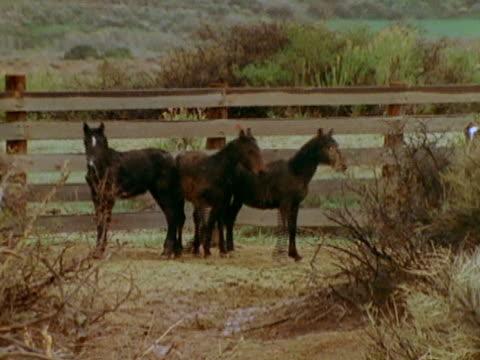 - montana western usa stock videos & royalty-free footage