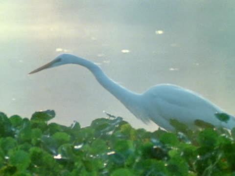 pov - water bird stock videos & royalty-free footage