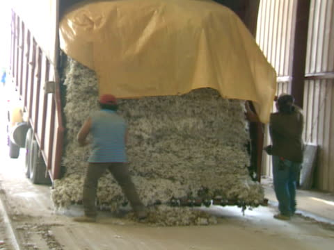 two males cutting tarp ropes off dump truck full of raw unprocessed cotton ms truck backing up cotton southern crop farming americana - dump truck stock videos and b-roll footage
