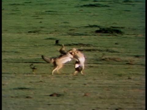 - animal ear stock videos & royalty-free footage