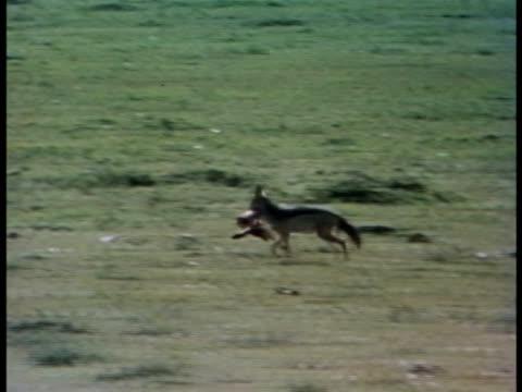 vídeos y material grabado en eventos de stock de pov - oreja animal