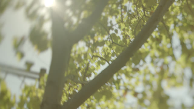 vidéos et rushes de medium angle of sun shining through leaves on tree. - tronc d'arbre