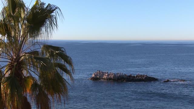 stockvideo's en b-roll-footage met wide angle of birds sitting on rock in cove. laguna beach. - laguna beach californië