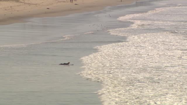 vídeos de stock, filmes e b-roll de wide angle of ocean waves on beach. marina in bg. - sc47