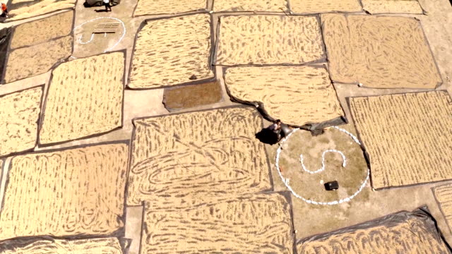 vídeos y material grabado en eventos de stock de coffee field peru - paisaje mosaico