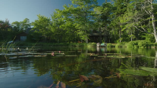 wide angle of surface of lake or pond. lily pads and reeds. dock and cabin or house in bg. trees along shore. - water plant stock videos and b-roll footage