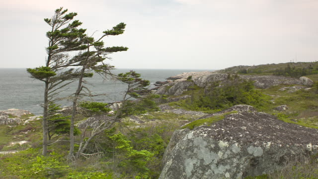 wide angle of rocky cliff, crag, or bluff near ocean. trees visible. - nova scotia stock videos and b-roll footage