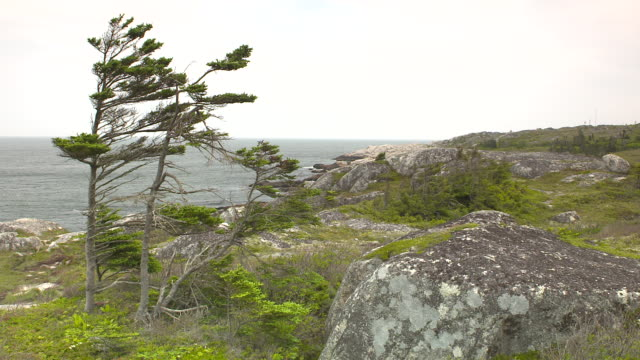WIDE ANGLE OF ROCKY CLIFF, CRAG, OR BLUFF NEAR OCEAN. TREES VISIBLE.