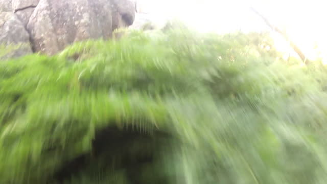 CLOSE ANGLE WITH FISH EYE LENSE OF GROUND IN WOODS. GRASSES, BUSHES, AND ROCKS VISIBLE.