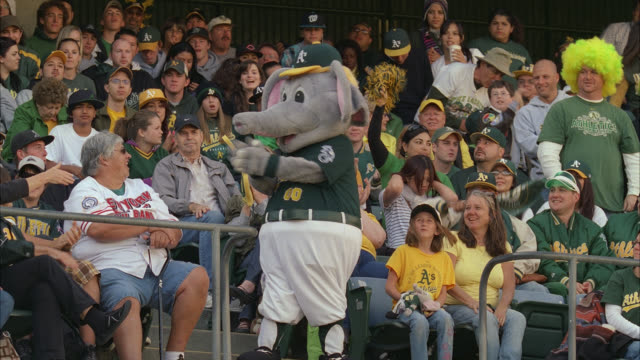 medium angle of oakland athletics elephant mascot among baseball fans sitting in stadium stands. people wearing oakland 'a's' baseball caps, sweatshirts clap and cheer as person in elephant costume points finger at camera, shakes belly, dances and amuses. - mascot stock videos & royalty-free footage