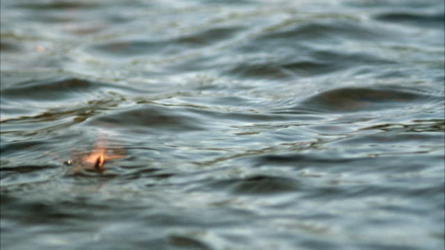 vidéos et rushes de medium angle of lure floating on surface of water. see insect fluttering. - lancer la ligne de canne à pêche