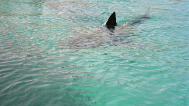 ZOOM IN OF OUTLINE OF SHARK IN WATER WITH DORSAL FIN STICKING OUT OF WATER.