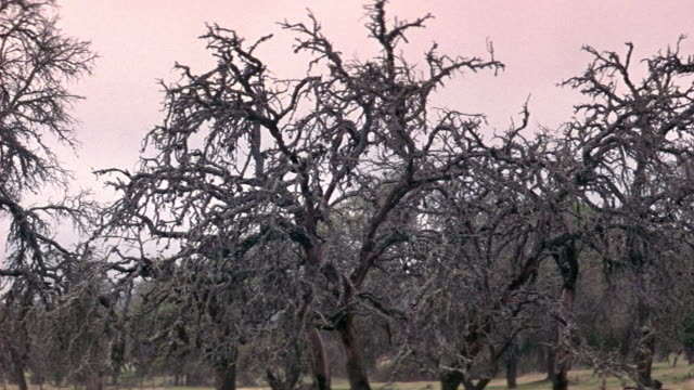 stockvideo's en b-roll-footage met up angle pan down to field of bare trees. branches look dark. could be used for field after a fire or tree lot. - bare tree