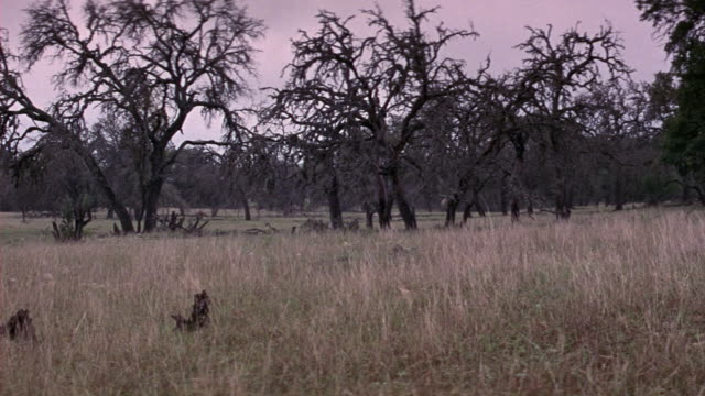 stockvideo's en b-roll-footage met wide angle pan right to left across field of bare trees. branches look dark. could be used for field after a fire or tree lot. - bare tree
