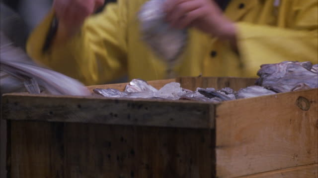 stockvideo's en b-roll-footage met close angle of two fishermen sorting through crate of fish and ice. fishermen wearing yellow ponchos. - visser