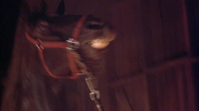 medium angle of horse thrashing about in barn. animals. farms. stables. - pferdestall stock-videos und b-roll-filmmaterial