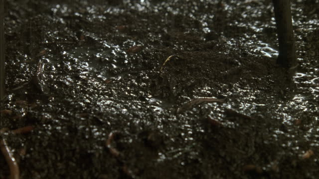 pan down on many earthworms squirming in wet mud. see rain falling on mud. - mud stock videos & royalty-free footage