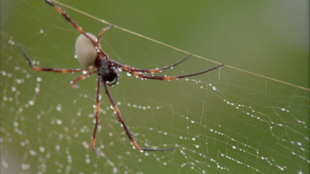 CLOSE ANGLE OF SPIDER CRAWLING OVER SPIDER WEB AS RAIN POURS DOWN.